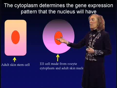 Preview of Stem Cells: Biology and Promise for Regenerative Medicine: Part 2: Tapping the Potential of Adult Stem Cells (1:17:03)